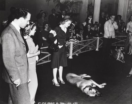 historia wystaw psów