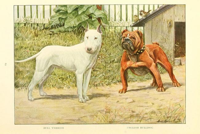 Kynologia nauka na temat różnych ras psów