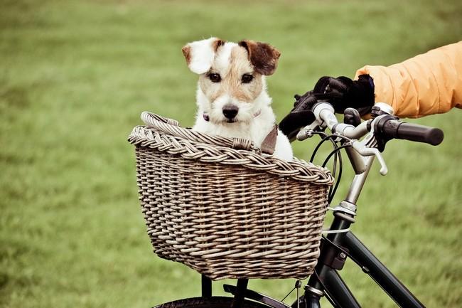 Koszyk rowerowy dla psa małego