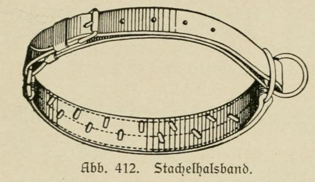 Rusunek kolczatki z 1921 roku