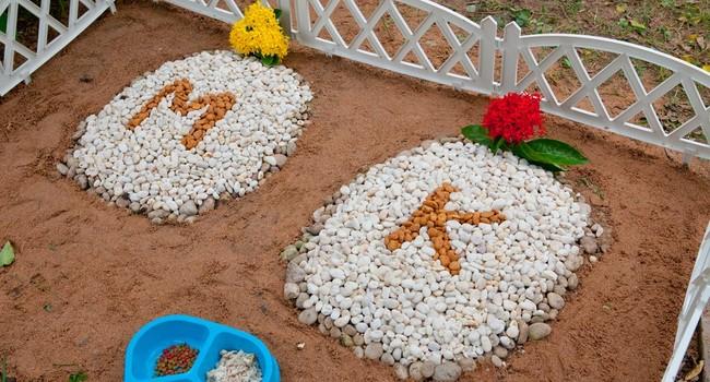 cmentarz dla zwierząt w toruniu