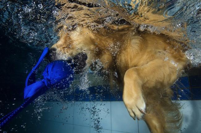 Pies i woda