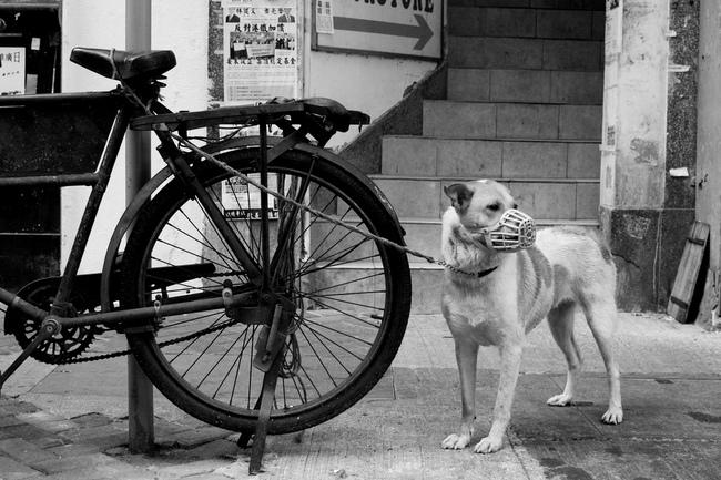 Czy mamy obowiązek chodzenia z psem na smyczy i w kagańcu