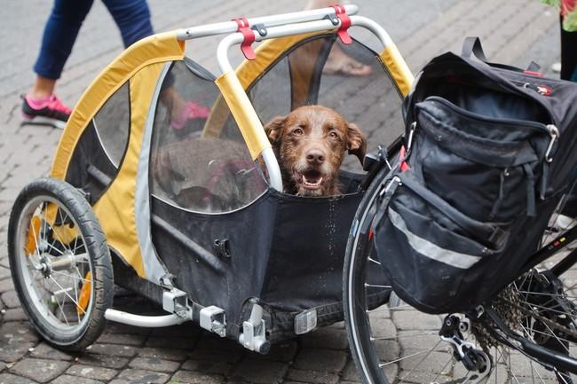 przyczeka rowerowa do przewozu psa