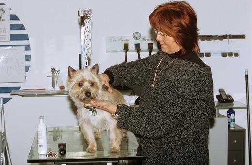 salon kosmetyczny dla psów