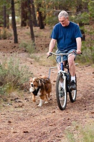 Pies biegnący na smycz doczepionej do roweru
