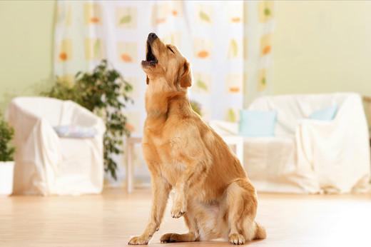 Głośne szczekanie psa sasiada