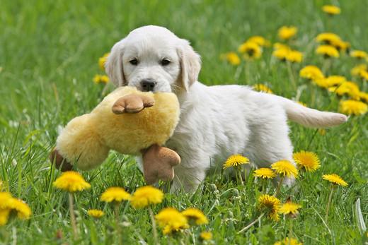 Co robić żeby pies rozwijał się prawidłowo