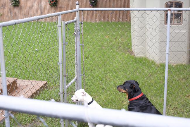 Metalowy wybieg dla psów