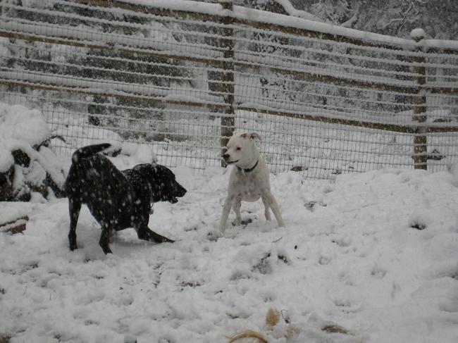 Duży wybieg dla psów