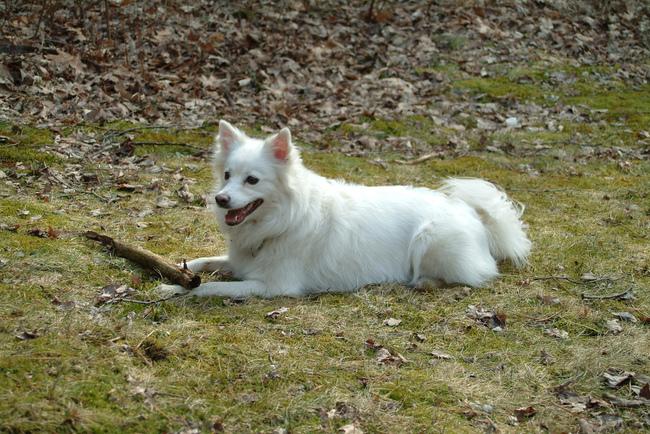 Rasa psów nieuznanych przez FCI