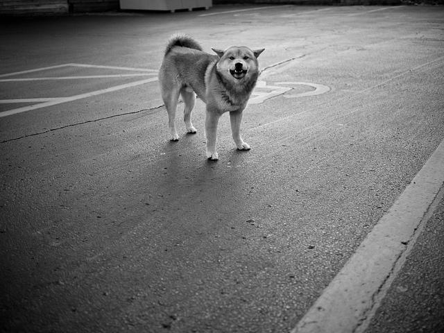 Życie psa bez dachu nad głową, bez jedzenia i picia