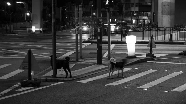 Bezpańskie psy wałęsające się po ulicach