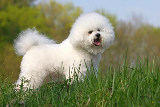 Psy Dla Alergików Lista Ras Ze Zdjęciami