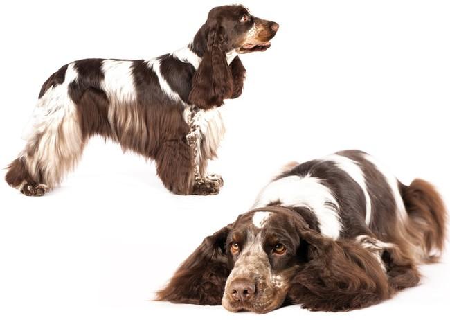 Wybór rasy psa dla par bezdzietnych