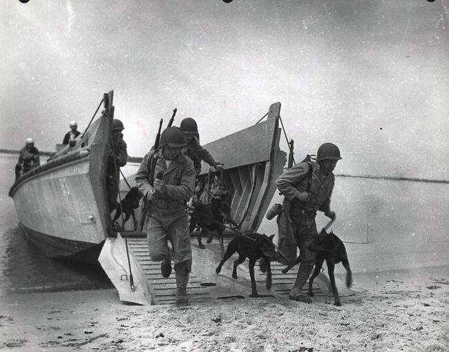 Żołnierze z Dobermanami wysadzani z amfibii