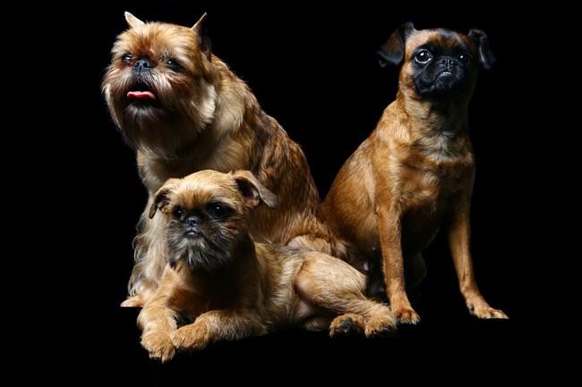 Wielka trójca Gryfoników