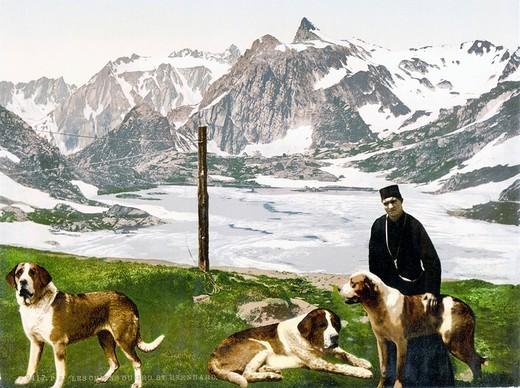 Zdjęcie psów rasy Bernerdyn w Szwajcarii