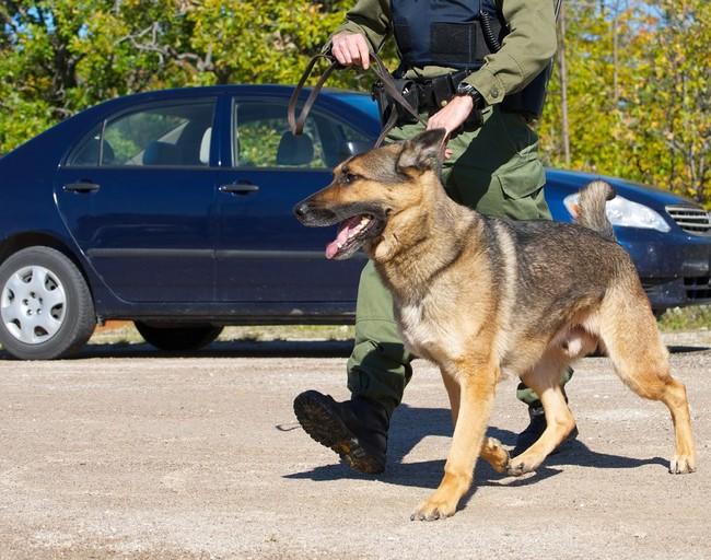 Psy służące w Straży Granicznej