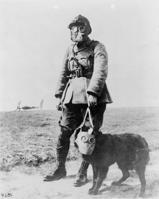 Rola psa w wojsku
