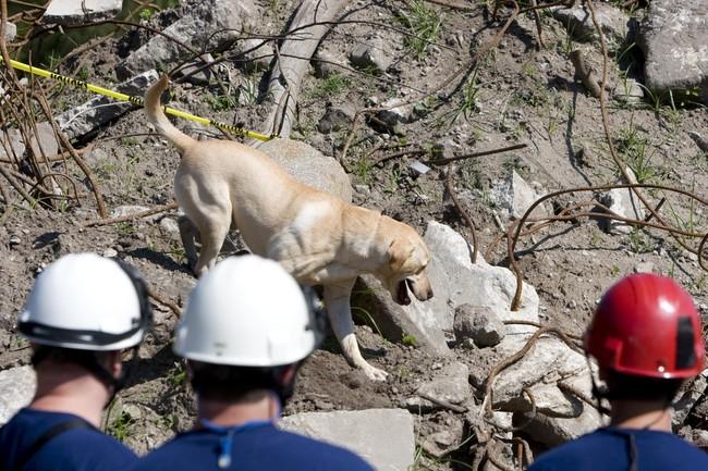 psy ratownicze na zwłoki