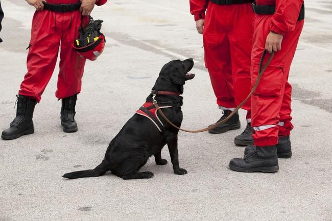 Pies ratowniczy na zwłoki