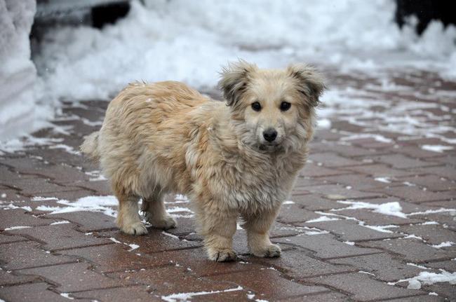psy adopcja, schronisko mazowieckie, adopcja psow
