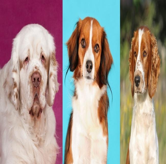 Grupy psów myśliwskich