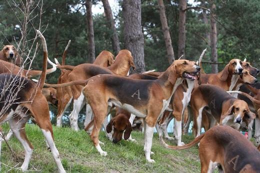 Psy Poiteviny