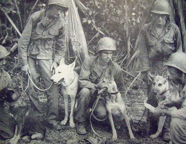 Psy na wojnie