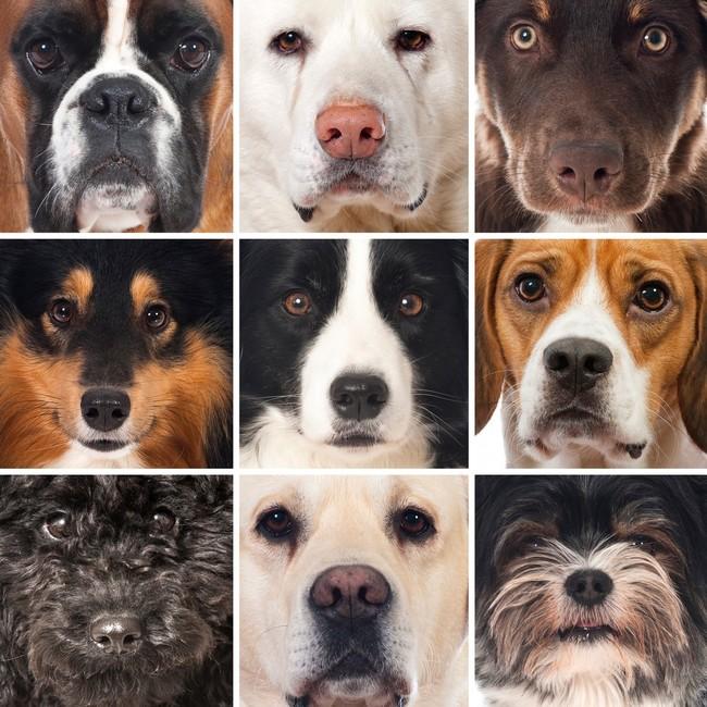 Podział psów na grupy FCI