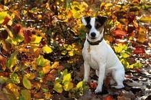 Psy ras małych o wysokim poziomie aktywności