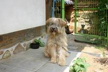 koreańska bardzo stara rasa psow