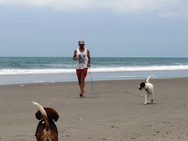 Rasy psów dla biegaczy i sportowców