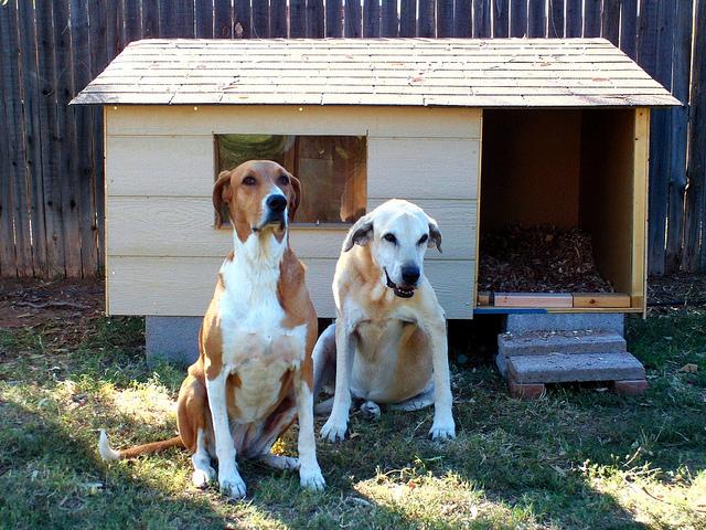 Zdjęcie budy dla psów z dachem jednospadowym