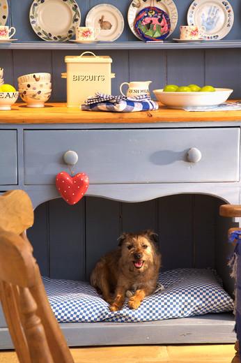 Ciekawy pomysł na fajną budę dla psa pod blatem w kuchni