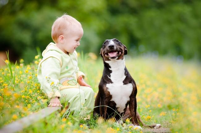 Czy TTB mogą być psami niańkami, dziecko i bulterier