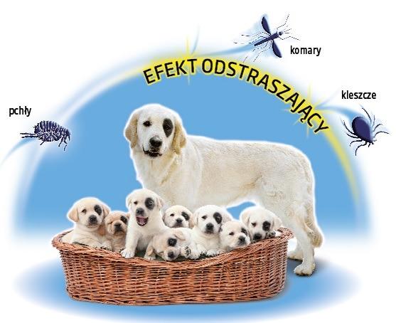 Ogólnopolska kampania odpowiedzialnej opieki na zwierzetami domowymi