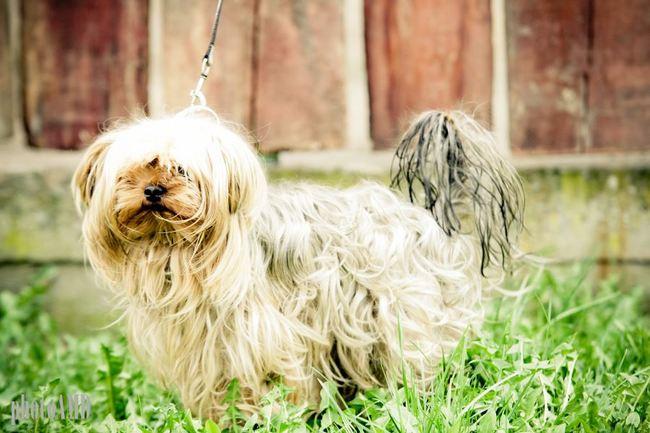 Psy do adopcji w schronisku