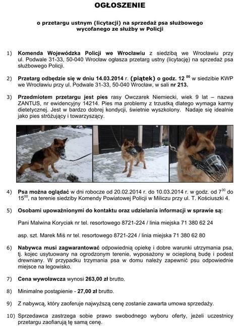 policja ogłosiła przetarg na sprzedaż psa policyjnego pies policyjny, pies policyjny na emeryturze, licytacja psa, sprzedaż psa policyjnego