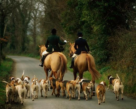 polowanie konne z psami