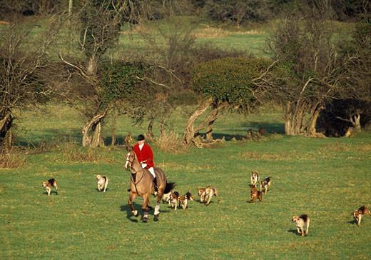 współczesne polowania z psami