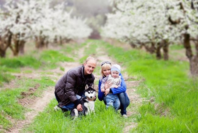 Rodzina z małym dzieckiem i szczeniakiem Husky