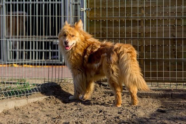 adopcja psów, pies do adopcji, schronisko, bezdomy pies