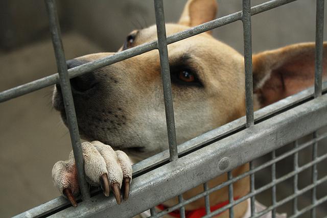 Pies przebywajacy w schronisku