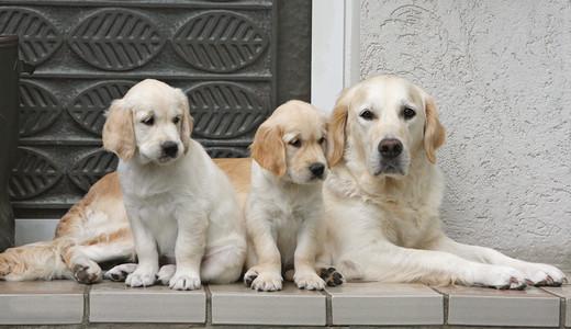 ABC sprzedaży psów w Polsce