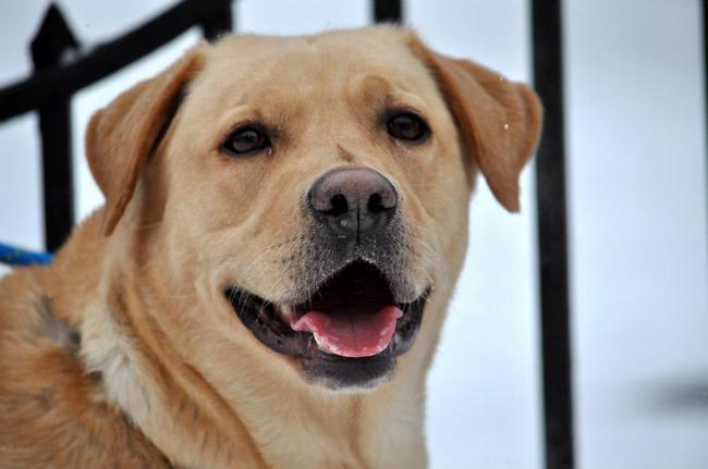 psy so adopcji