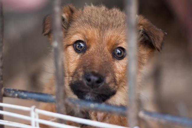Znalezione obrazy dla zapytania pies ze schroniska