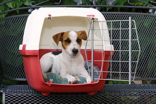 Transporter dla psa malego