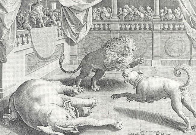 historia walk psów z dzikimi zwierzętami